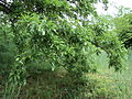 Парк шума Гази Баба во мај (122).JPG
