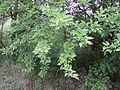 Парк шума Гази Баба во мај (184).JPG