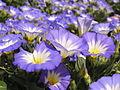 Растения в Седово 043.JPG