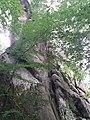 Скельно-печерний комплекс на Франківщині (2).jpg