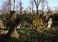 Старий цвинтар - panoramio (1).jpg
