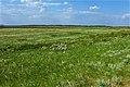 Степь в пору цветения - panoramio.jpg