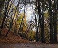 Стрийський парк, осінь 06.jpg