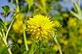 Цветы ботанического сада. - panoramio (2).jpg