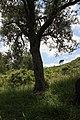 פארק הכרמל 1 - גנים לאומיים בצפון הארץ - אתרי מורשת 2016 (153).jpg