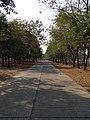 จังหวัดอุบลราชธานี UBISD (UBON) rd. - panoramio - JAMRAT (1).jpg