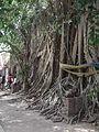 โบสถ์ วัดบางกุ้ง Wat Bangkoong.jpg