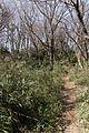 七生丘陵散策コース - panoramio.jpg