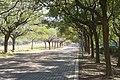 嘉義縣國立中正大學 - panoramio - Chi-Hung Lin.jpg