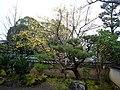 天龍寺 Sagatenryuji Temple - panoramio.jpg