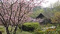 杭州 西湖 浴鸪湾(市长林-海棠花) - panoramio.jpg
