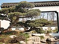 盆景博物馆景色 - panoramio - 江上清风1961 (6).jpg
