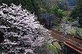 美加の台にて 南海高野線のトンネル 2014.4.01 - panoramio.jpg