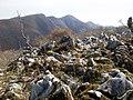 藤原岳を望む - panoramio.jpg