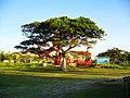 银滩的许愿树 - panoramio.jpg