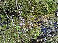 0026 Pflanzen CC0 1.0.jpg