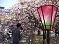 032 (5) Sakura.JPG