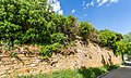 051 2015 05 10 150-jähriger Efeustock (Wiki Loves Earth 2015).jpg