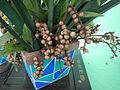 05704jfMidyear Orchid Plants Shows Quezon Cityfvf 11.JPG