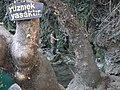 07119 Fettahlı-Aksu-Antalya, Turkey - panoramio (88).jpg