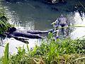 0882 sculptures de Malam dans l'eau.jpg