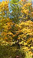 13 Брянский лес Номинация Природа Котова Мариша.jpg