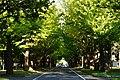 151010 Hokkaido University Japan05s3.jpg