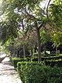 195 Parc del Pla de l'Alemany.jpg