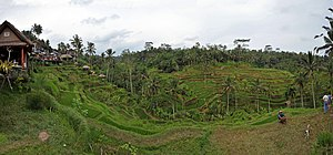 English: Tegalalang rice terrace Ubud Bali 201...
