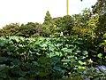 1 Todoroki, Nakahara-ku, Kawasaki-shi, Kanagawa-ken 211-0052, Japan - panoramio (8).jpg