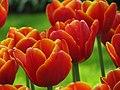 20090501-03 Tulpenweekend Nederland (0327).jpg
