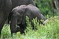 20090507-TZ-NGO Safari 341 (4677397209).jpg
