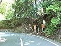 2010-5-30 村上義光の墓(MurakamiYoshiteru no haka) - panoramio (3).jpg
