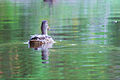 2012 Photo Contest - Wildlife Category (7944866086).jpg