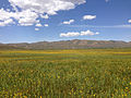 2014-06-24 11 24 29 Meadows along the Bruneau River south of Charleston, Nevada.JPG