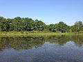 2014-08-27 15 49 56 View northeast from the boat launch at Wargo Pond in the Stony Brook-Millstone Watershed Association, New Jersey.JPG