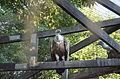 2015-09-04. Сафари-парк в Краснодаре 037.jpg