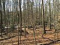 2016-02-08 11 52 29 Forest and a tributary of Difficult Run along the Gerry Connolly Cross County Trail between Miller Heights Road and Vale Road in Oakton, Fairfax County, Virginia.jpg