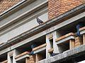 2016 detalle balcón del Palacio Municipal Montevideo.jpg