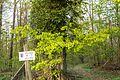 2017-04-24 FFH-Gebiet 6622-341 Jagsttal bei Schöntal und Klosterwald.jpg