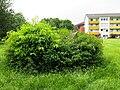 2018-06-01-bonn-marienburger-strasse-gruenanlage-schraege-01.jpg