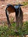 2021-04-03 11-33-12 oiseau 03.jpg