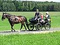 21te Rammenauer Schlossrundfahrt der Pferdegespanne (018).jpg