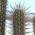 2808 cactus.jpg