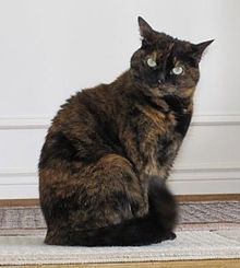 6-year old tortoise shell cat.jpg