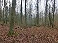 77Win ZB-plateau (03).jpg