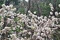 89 White flowers.jpg