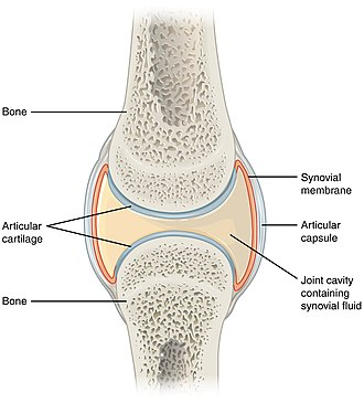 Synovial joint - Structure of synovial joint