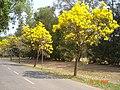 AIT - panoramio - Seksan Phonsuwan (14).jpg