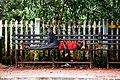 A Nap - Flickr - Dr. Santulan Mahanta.jpg